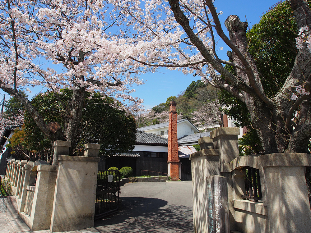 醤油の昔町と桜-兵庫県たつの市龍野町